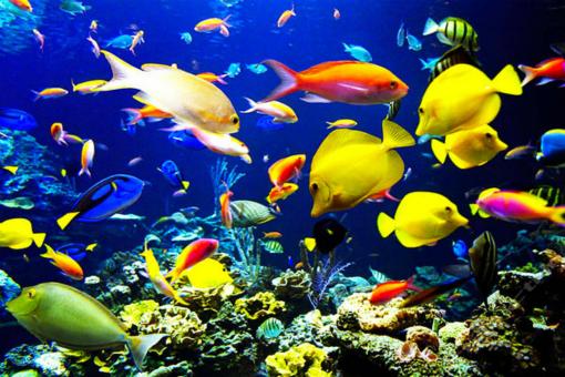 极地海洋世界彩色